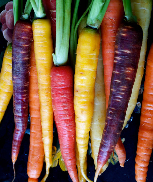 Colored Carrot Combination