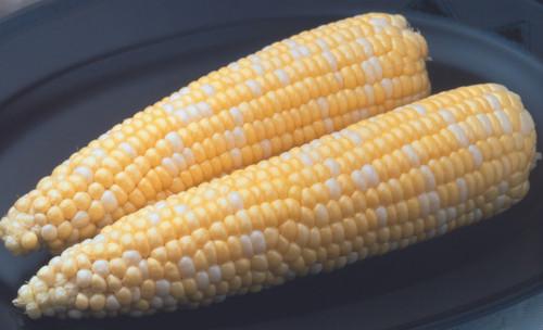 Ambrosia F1 Sweet Corn
