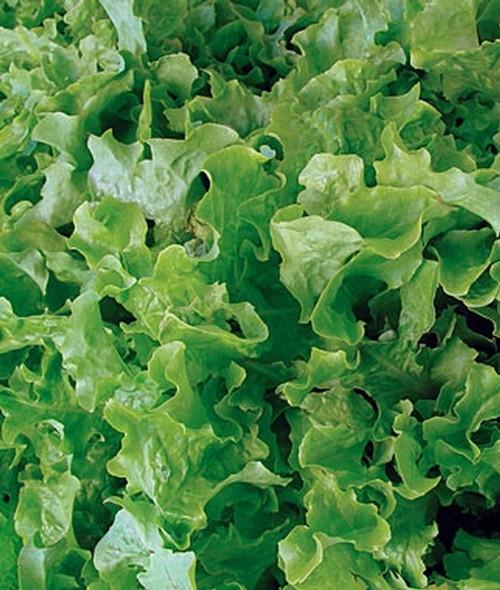 Salad Bowl, Green