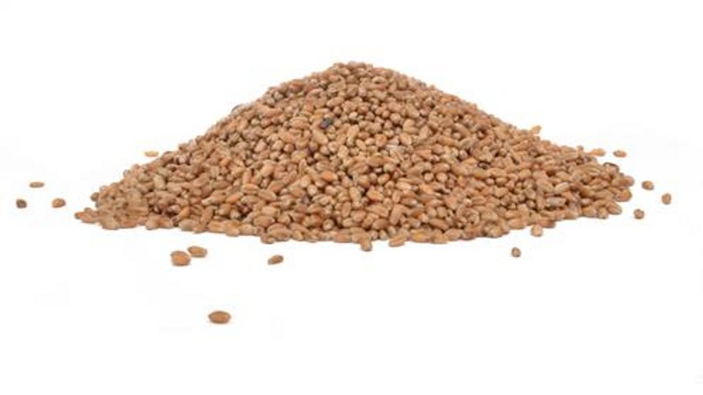 Hard Western Wheat