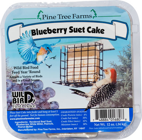 Blueberry Suet Cake