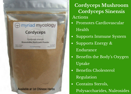 cordyceps mushroom, mushrooms, powder, traditional bulk herbs, bulk tea, bulk herbs, teas, medicinal bulk herbs