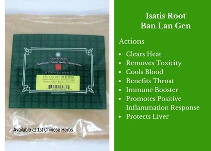 Isatis root, ban lan gen, powder, traditional bulk herbs, bulk tea, bulk herbs, teas, medicinal bulk herbs