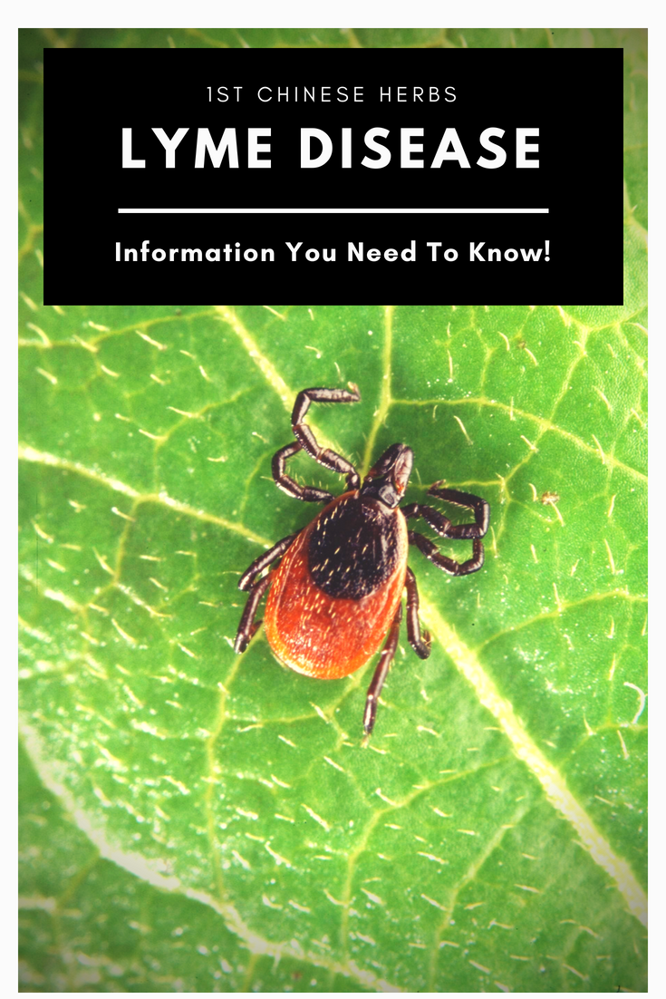 Lyme Disease Information - Symptoms, Prevention, Treatment
