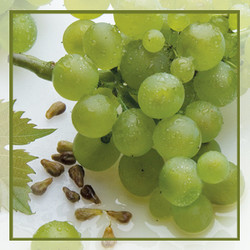 GRAPE SEED OIL REFINED