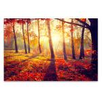 Autumn Sun Rays Canvas Print