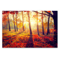 Autumn Sun Rays Canvas Print