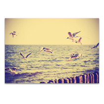 Flying Birds Canvas Art Print