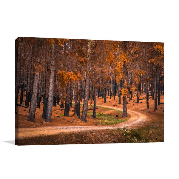 Adelaide Hills Wall Print Forest Autumn Photo Canvas
