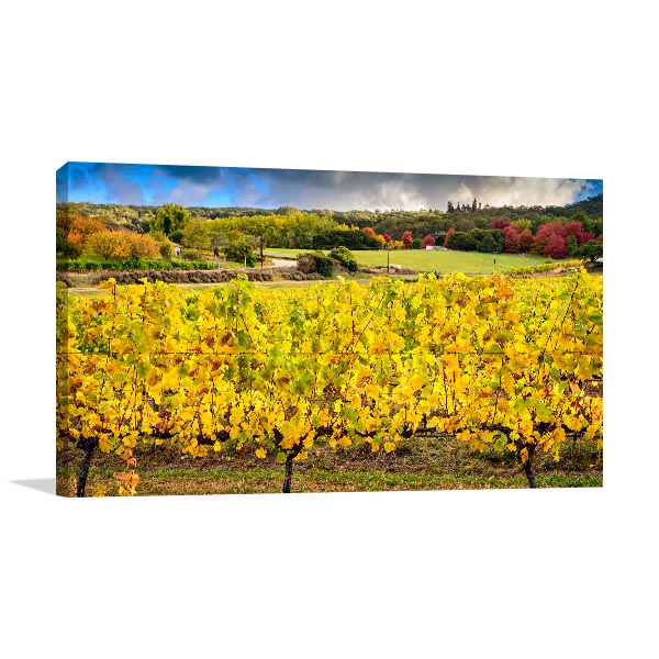 Adelaide Hills Wall Print Grapevine Autumn Canvas Artwork