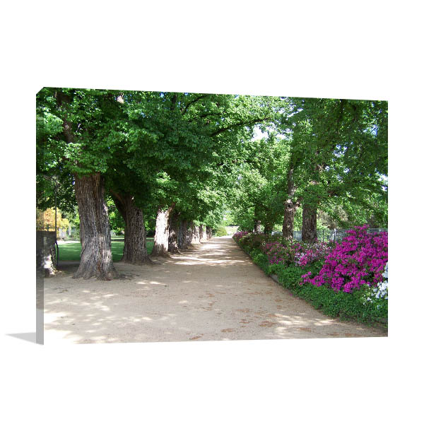 Albury Botanical Gardens Art Print Elm Trees Artwork Wall