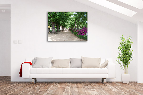 Albury Botanical Gardens Art Print Elm Trees Photo Artwork