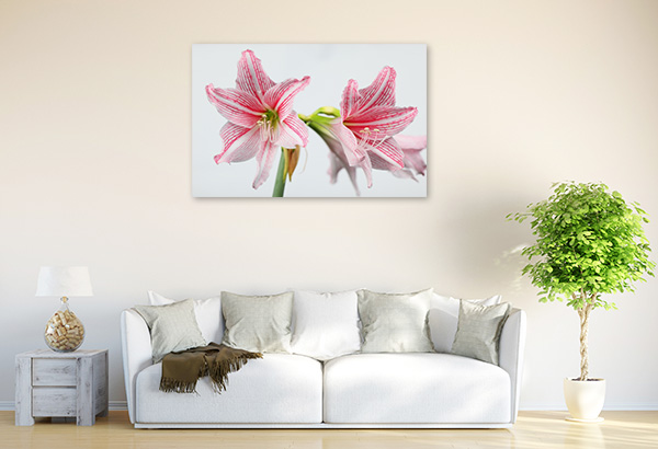Amaryllis on White Background Wall Artwork