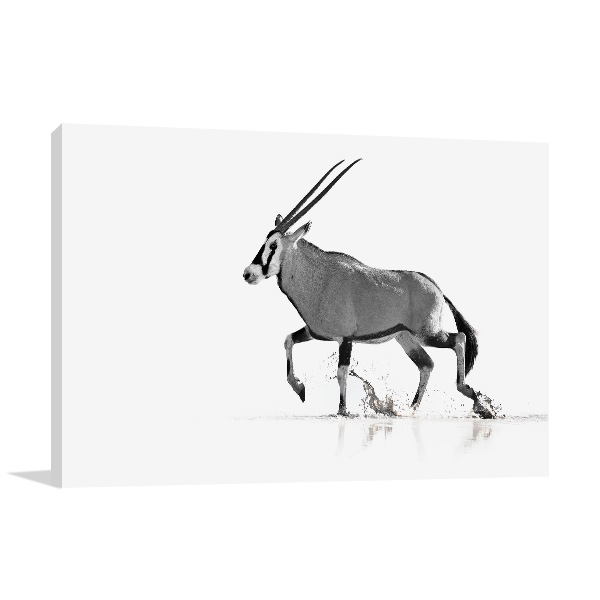 Antelope in Black and White Picture Canvas
