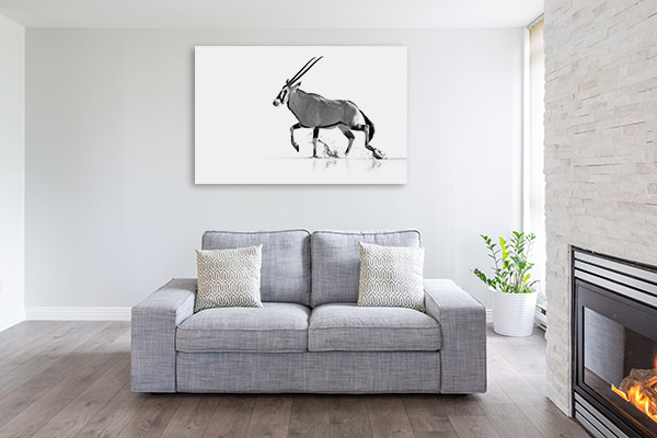 Antelope in Black and White Photo Canvas