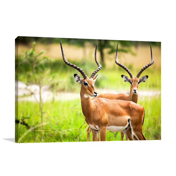 Antelopes Artwork Picture