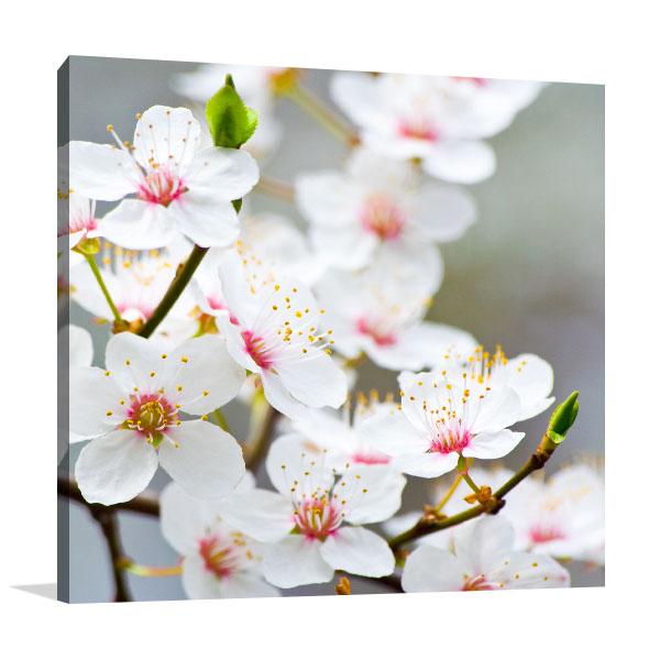 Apple Blossoms Photo Canvas