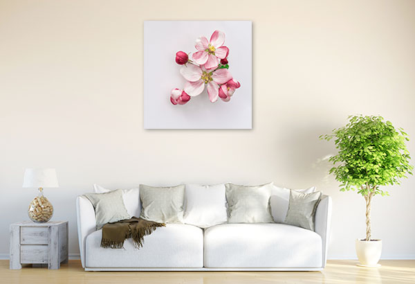 Apple Blossoms on White Background Wall Photo