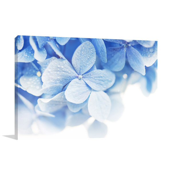 Baby Blue Hydrangea Canvas Artwork