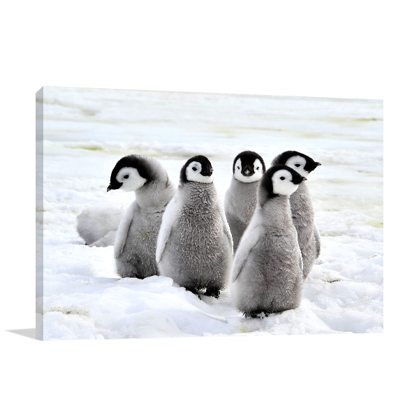 Baby Penguins in Antarctica Wall Canvas