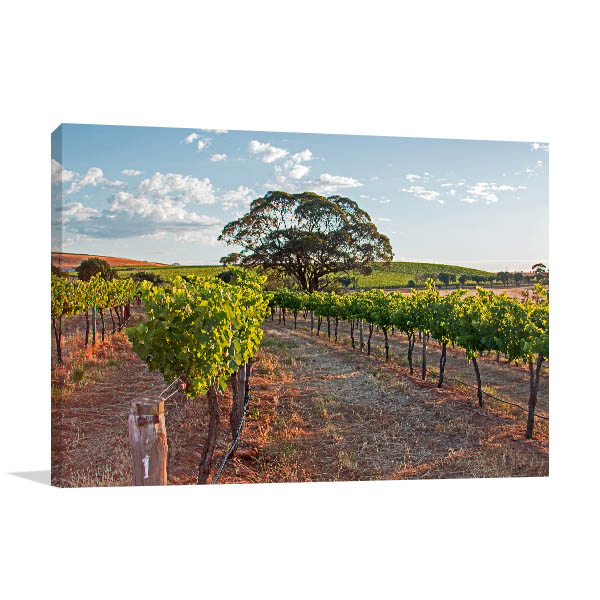 Barossa Valley Wall Print Sunrise Art Picture