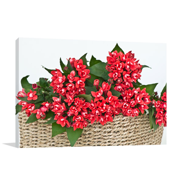 Basket of Red Longiflora Canvas Wall