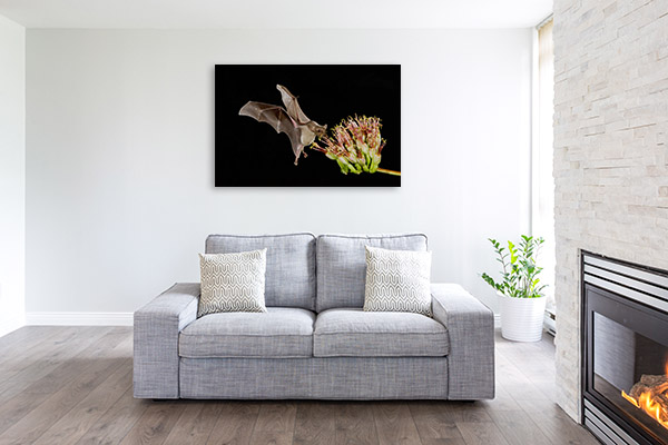 Bat Feeding on Flower Photo Wall Arts