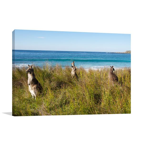 Batemans Bay Canvas Print Kangaroo Beach Photo Art