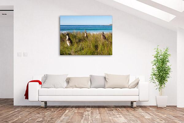Batemans Bay Canvas Print Kangaroo Beach Art Photo