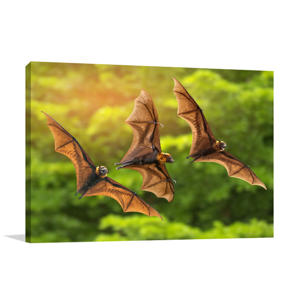 Bats in Flight Canvas Photo Print