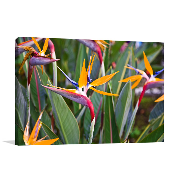 Birds of Paradise Art Photo
