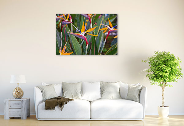 Birds of Paradise Print Picture