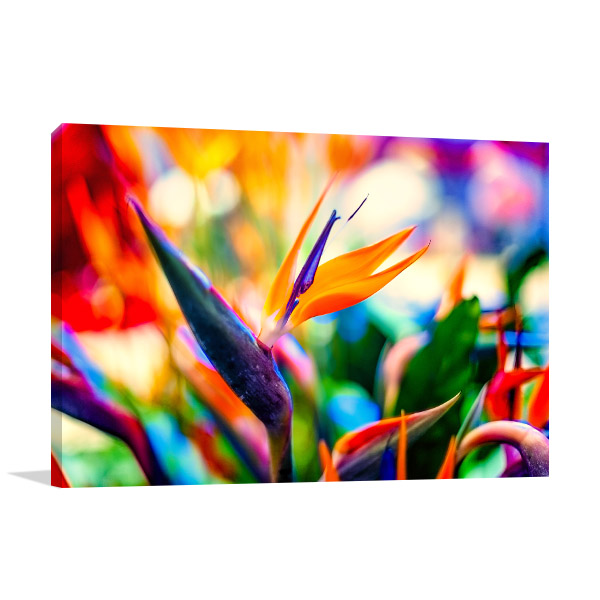 Birds of Paradise Closeup Picture Canvas