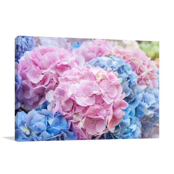 Blue and Pink Hydrangea Photo Wall Arts