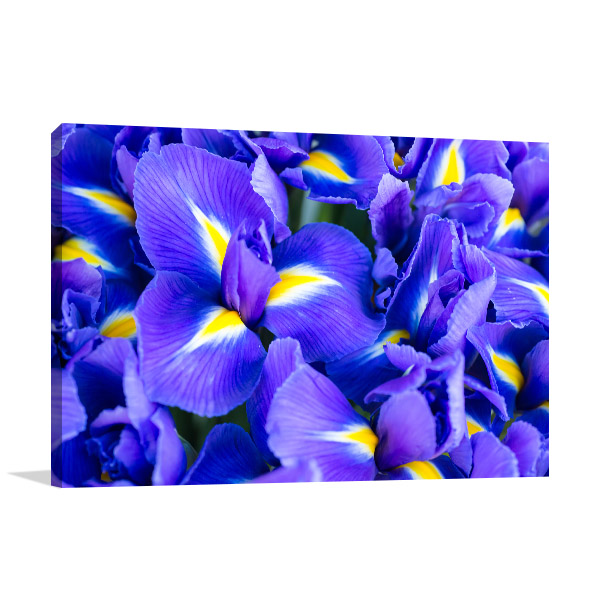 Blue Iris Wall Art Decor