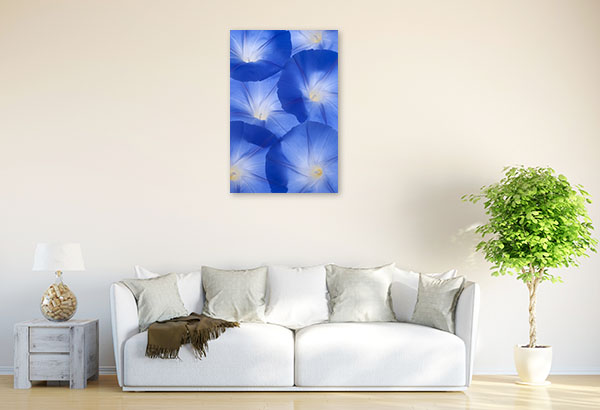Blue Morning Glory Art Picture