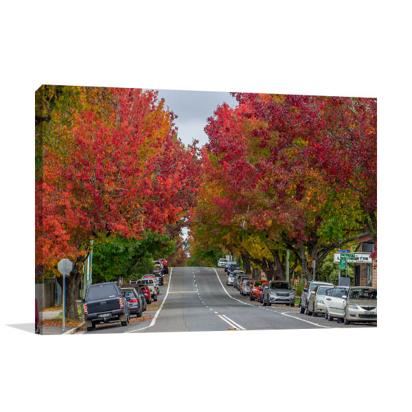 Blue Mountains Art Print Blackheath Autumn Trees Canvas Wall