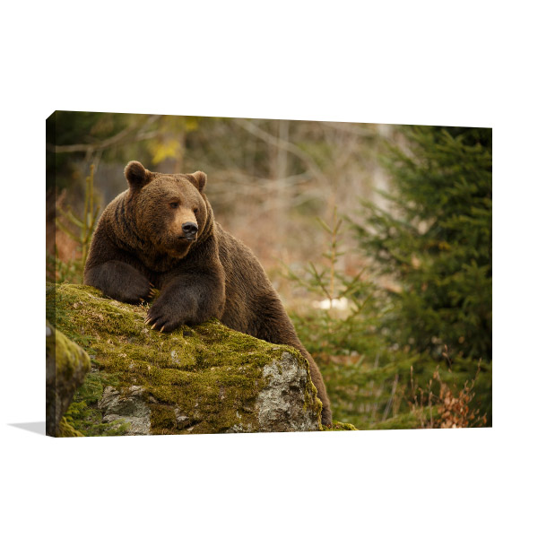 Brown Bear in Forest Artwork Canvas