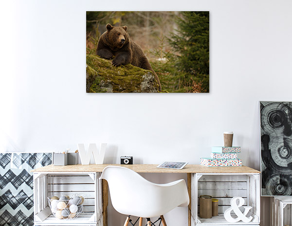 Brown Bear in Forest Art Picture