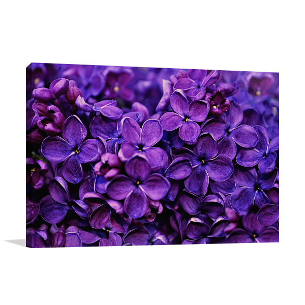 Bunch of Lilacs Photo Canvas