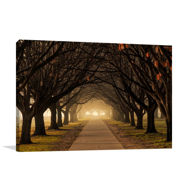 Canberra Art Print Winter Trees Canvas Photo
