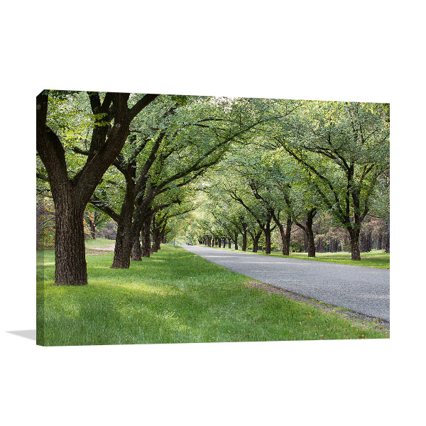Canberra Wall Art Print Tree Lined Avenue Picture Canvas