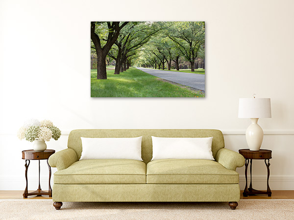 Canberra Wall Art Print Tree Lined Avenue Canvas Photo
