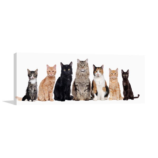 Cat Breeds Canvas Photo Print