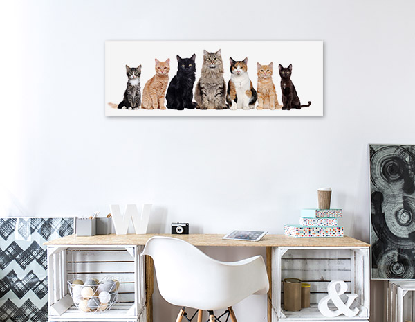 Cat Breeds Photo Wall Arts