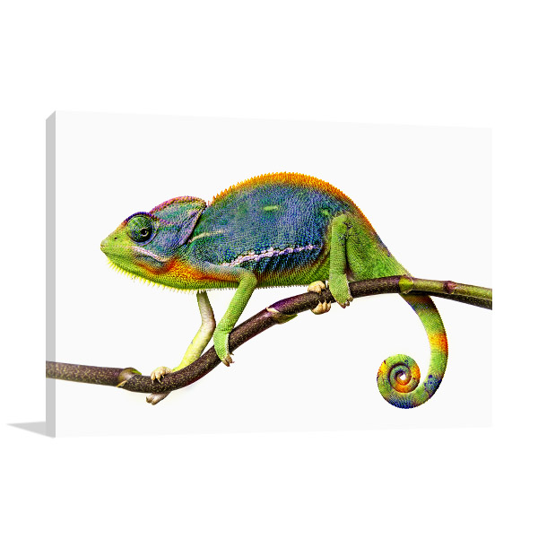 Chameleon in Tree Branch Print Artwork