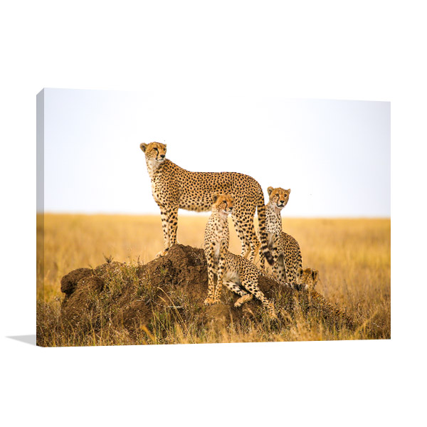 Cheetahs in the Wild Print Art Canvas