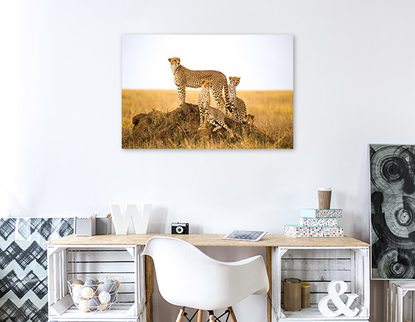 Cheetahs in the Wild Canvas Prints