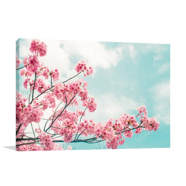Cherry Blossoms Photo Art