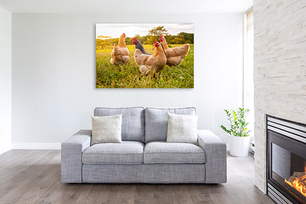 Chickens Art Photo